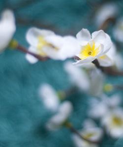 LJUSSLINGA CherryBlossom